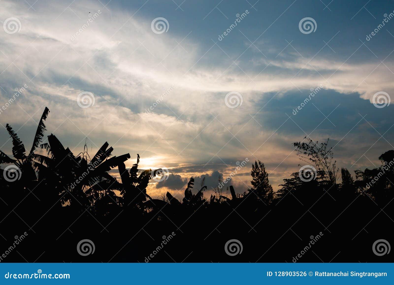 Cr?puscule tropical de ciel d arbre et d or de silhouette dans la soir?e ? la for?t sur la montagne fond de vue de paysage