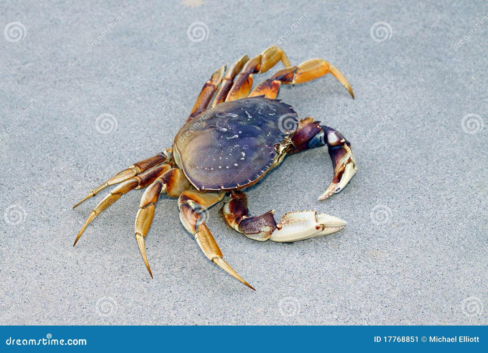 Download Crab stock image. Image of shellfish, mephoto, reddish - 17768851