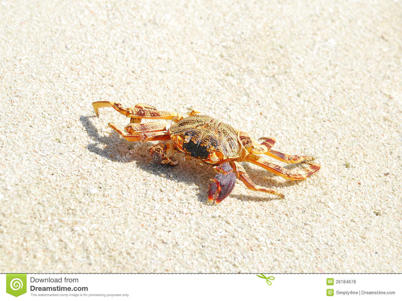 crab crawling royalty free stock photos image 26184678