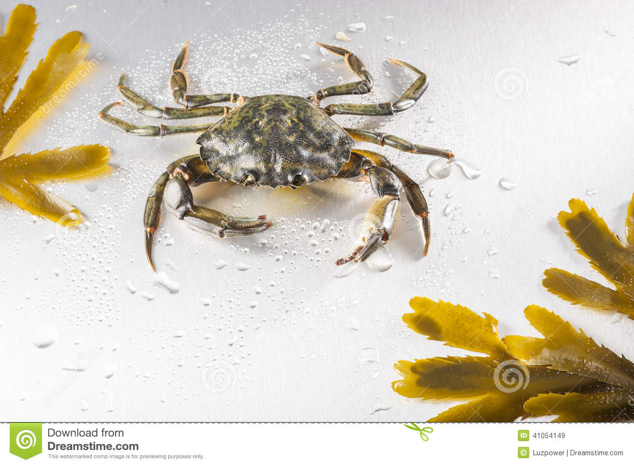 Crab crustacean claw seafood food one animal studio for Animals that are included in the cuisine of seafood