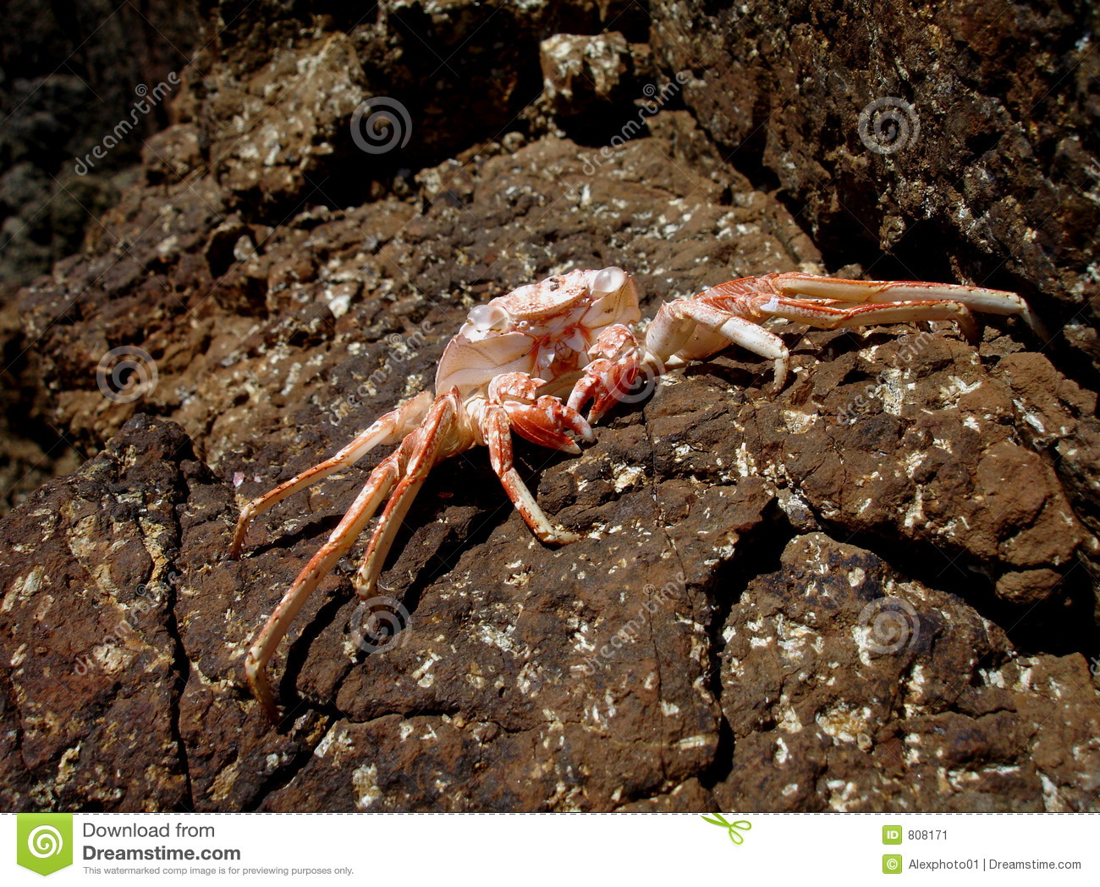 Puerto Rican Crab Recipe — Dishmaps