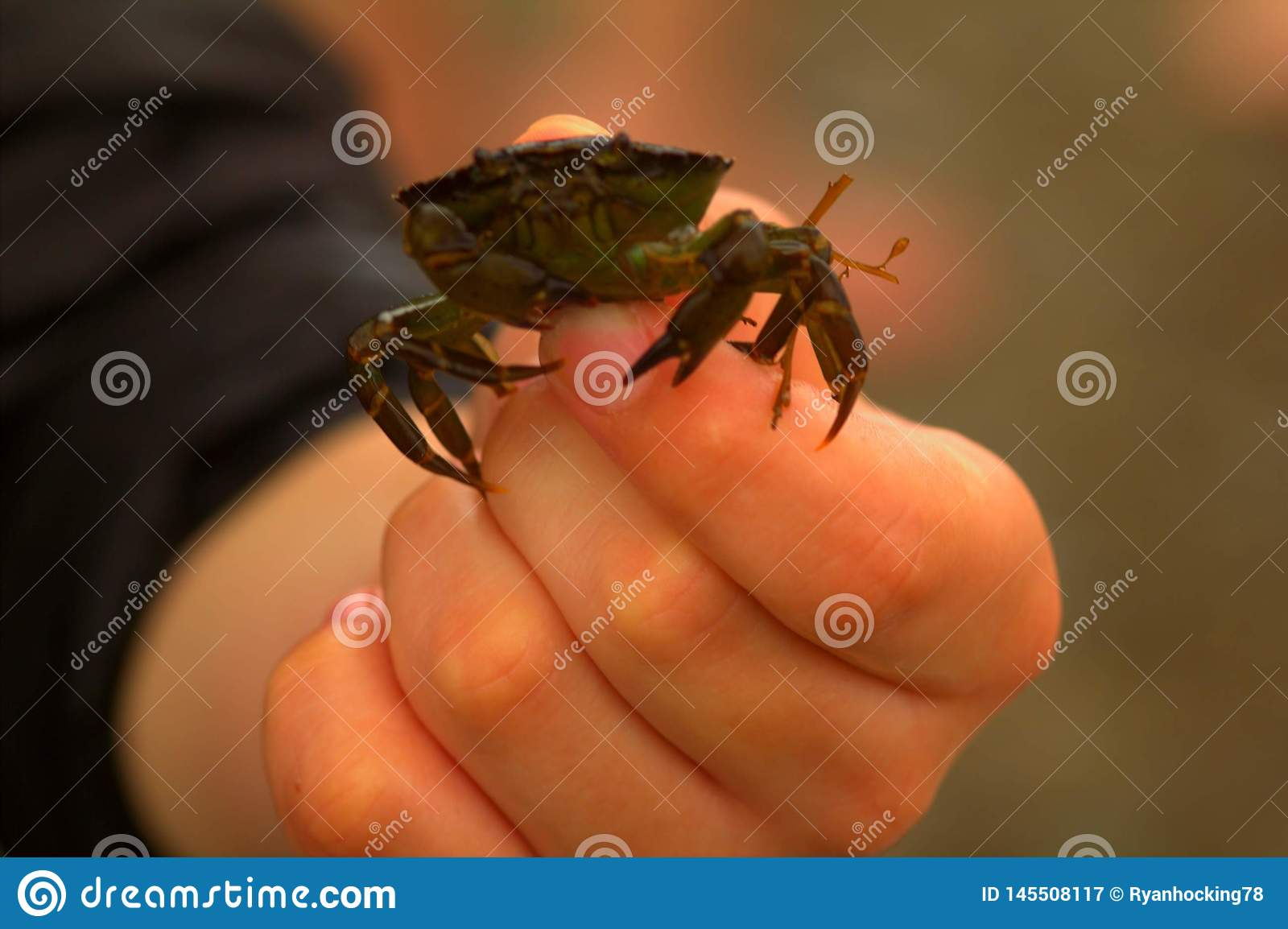 Crab in my hand