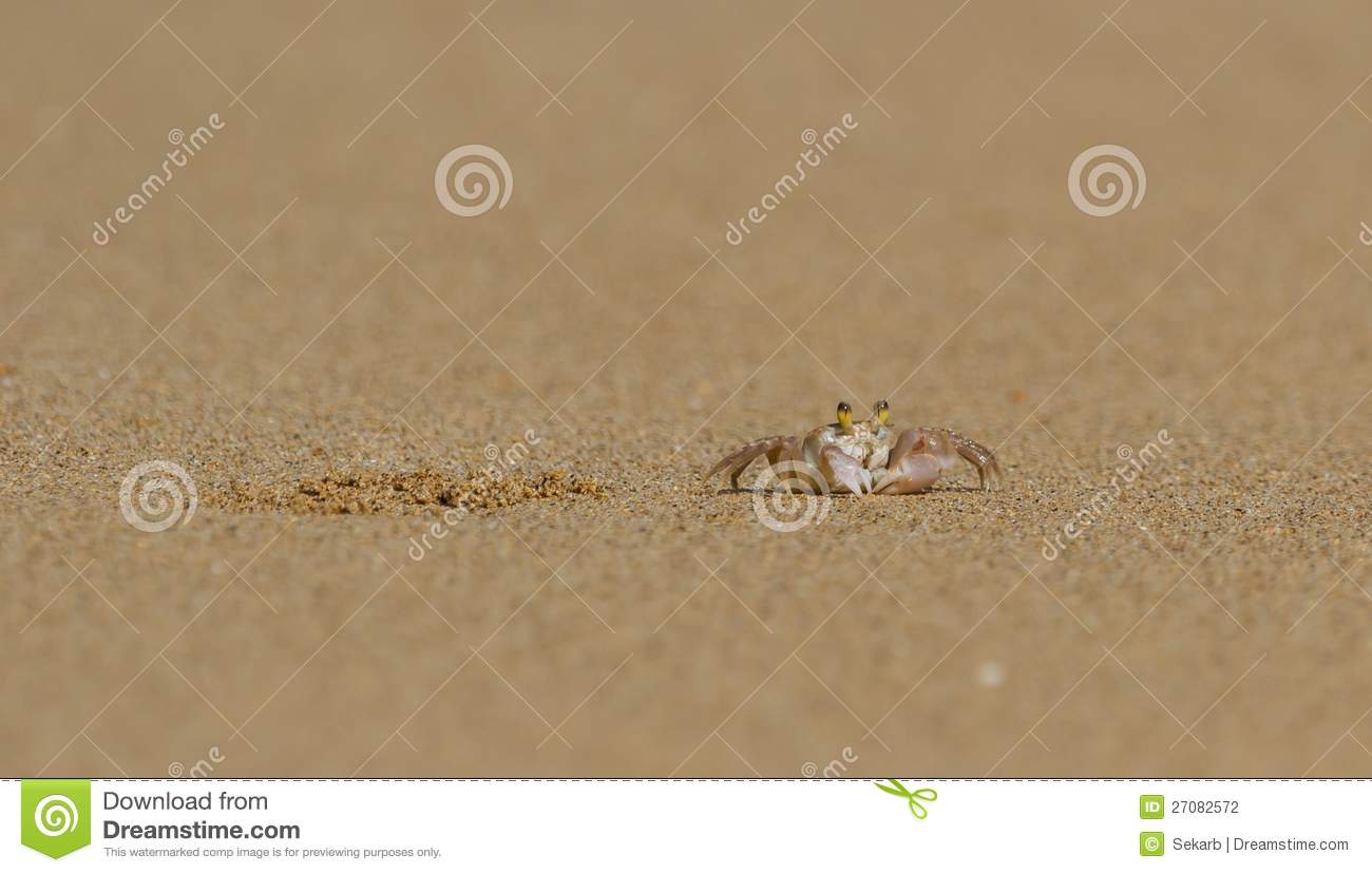 Tropical Island Beach Ambience Sound: Crab Next To Its Burrow Stock Photography