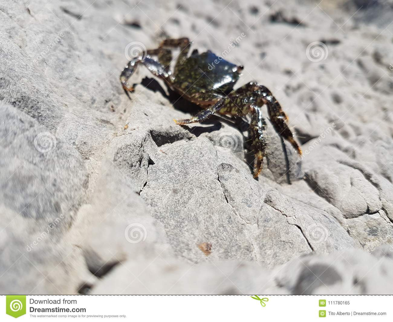 Crab on rock