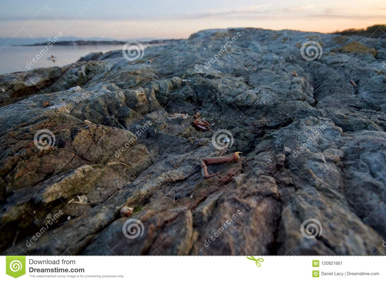 Crab shells scattered on the rocks of Cattle Point with Oak Bay in the background