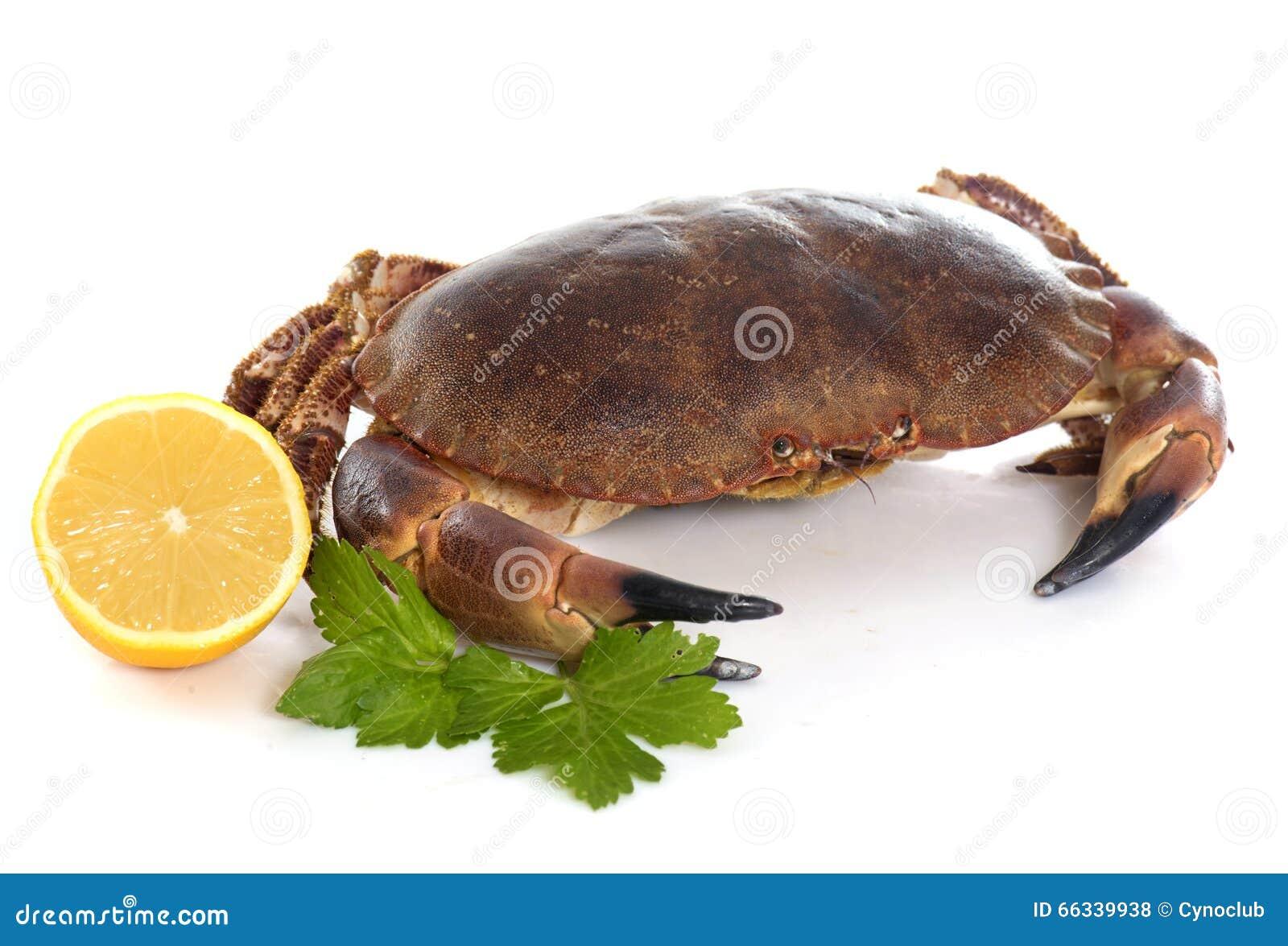 Crabe brun comestible