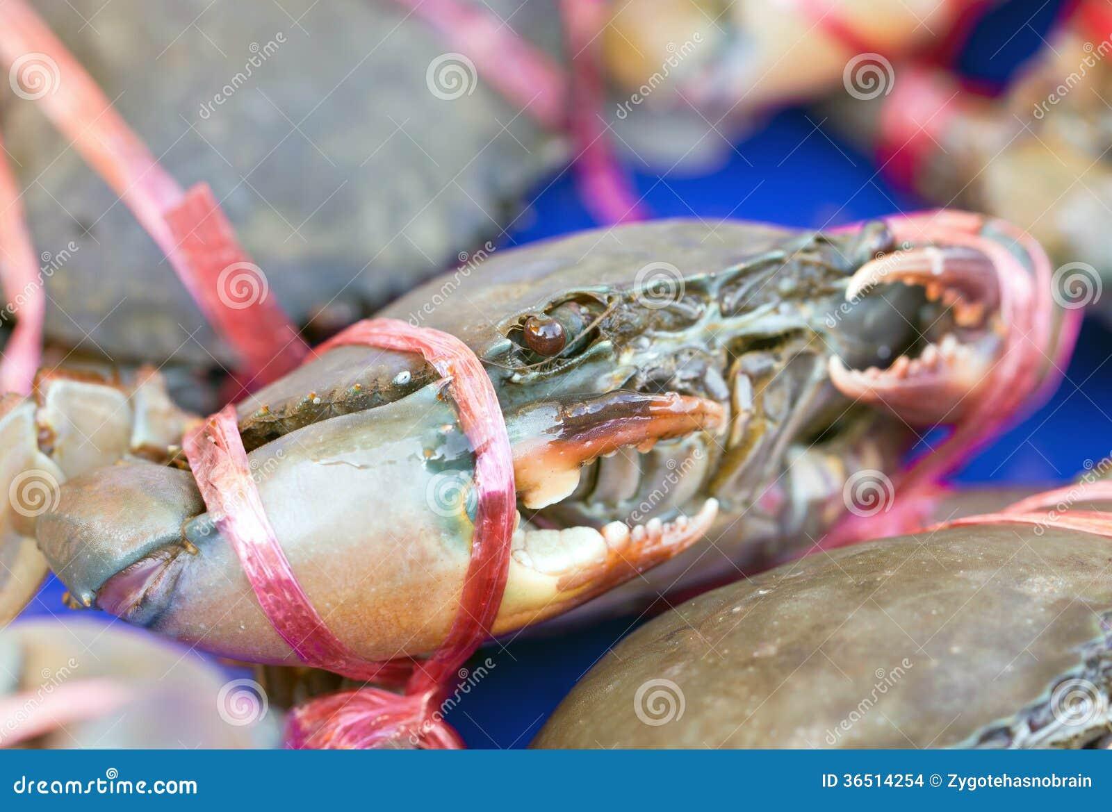 Crabe cru.