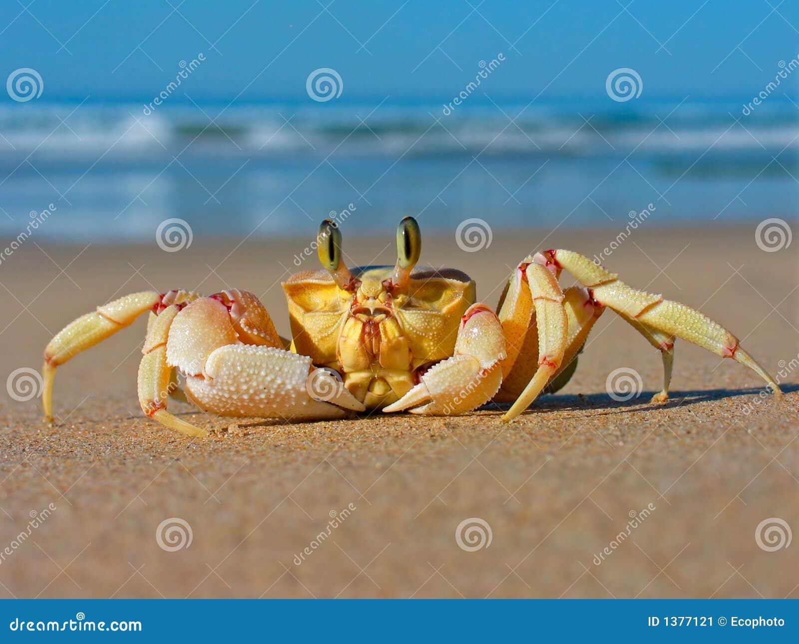 Crabe d ordinateur de secours