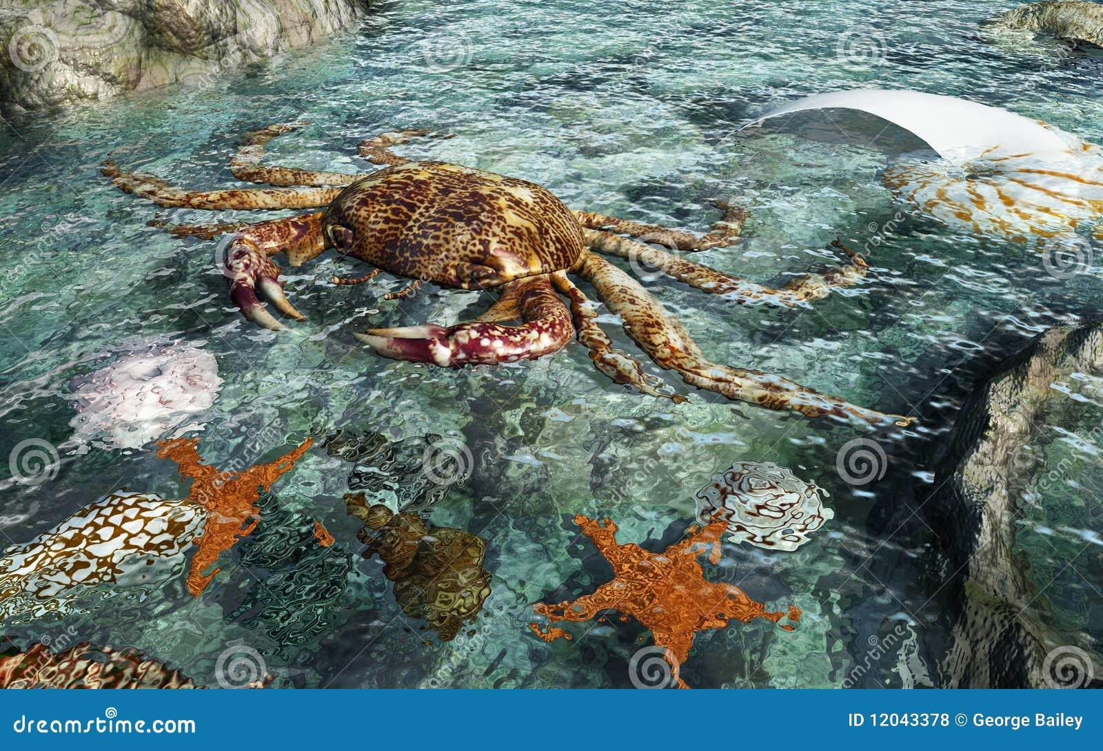 crabe dans l 39 eau illustration stock image du shells 12043378. Black Bedroom Furniture Sets. Home Design Ideas