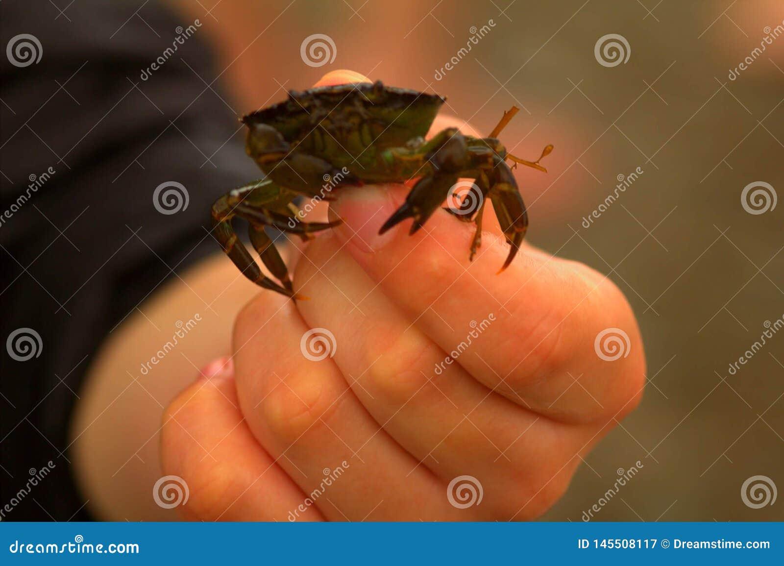 Crabe dans ma main