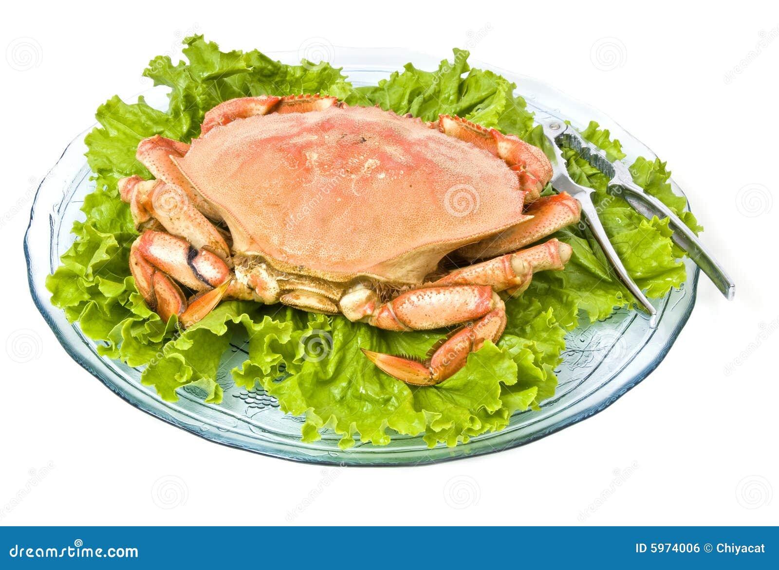 Crabe de Dungeness d isolement sur le blanc