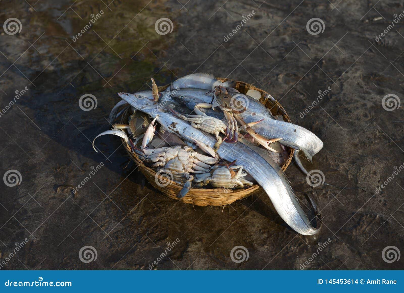 Crabes et poissons frais à la jetée de harne, Dapoli, Ratnagiri, maharashtra