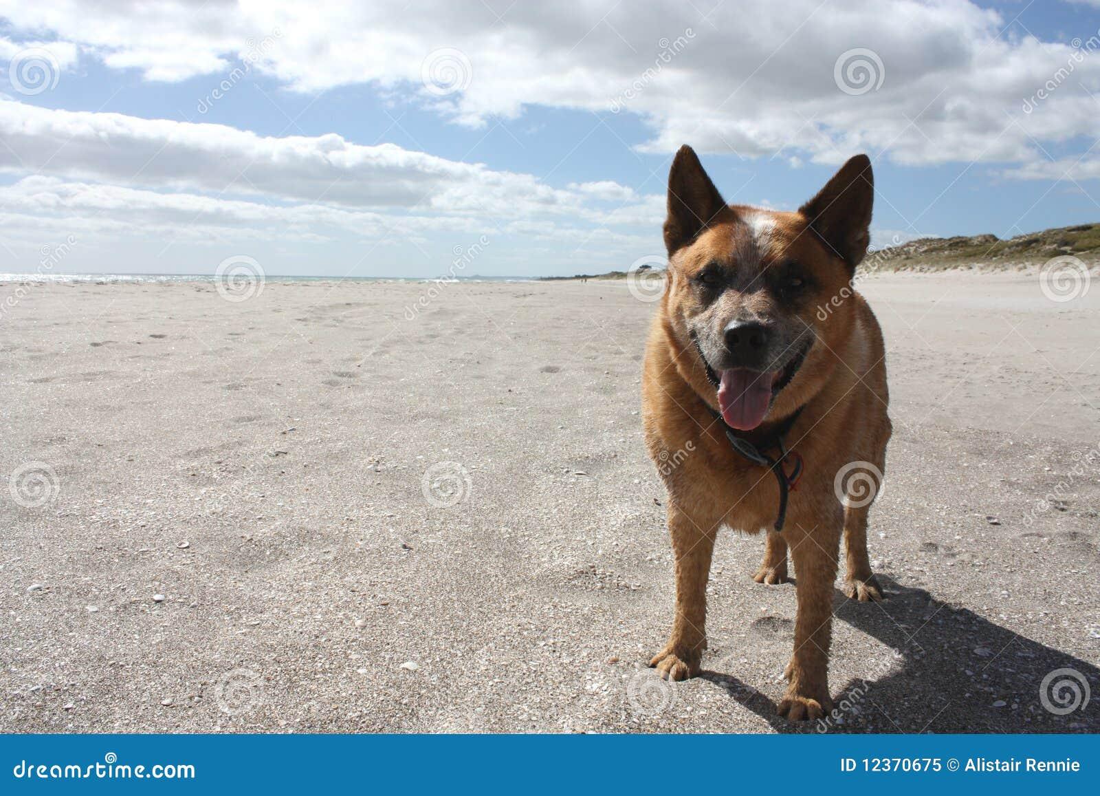 Crabot à la plage
