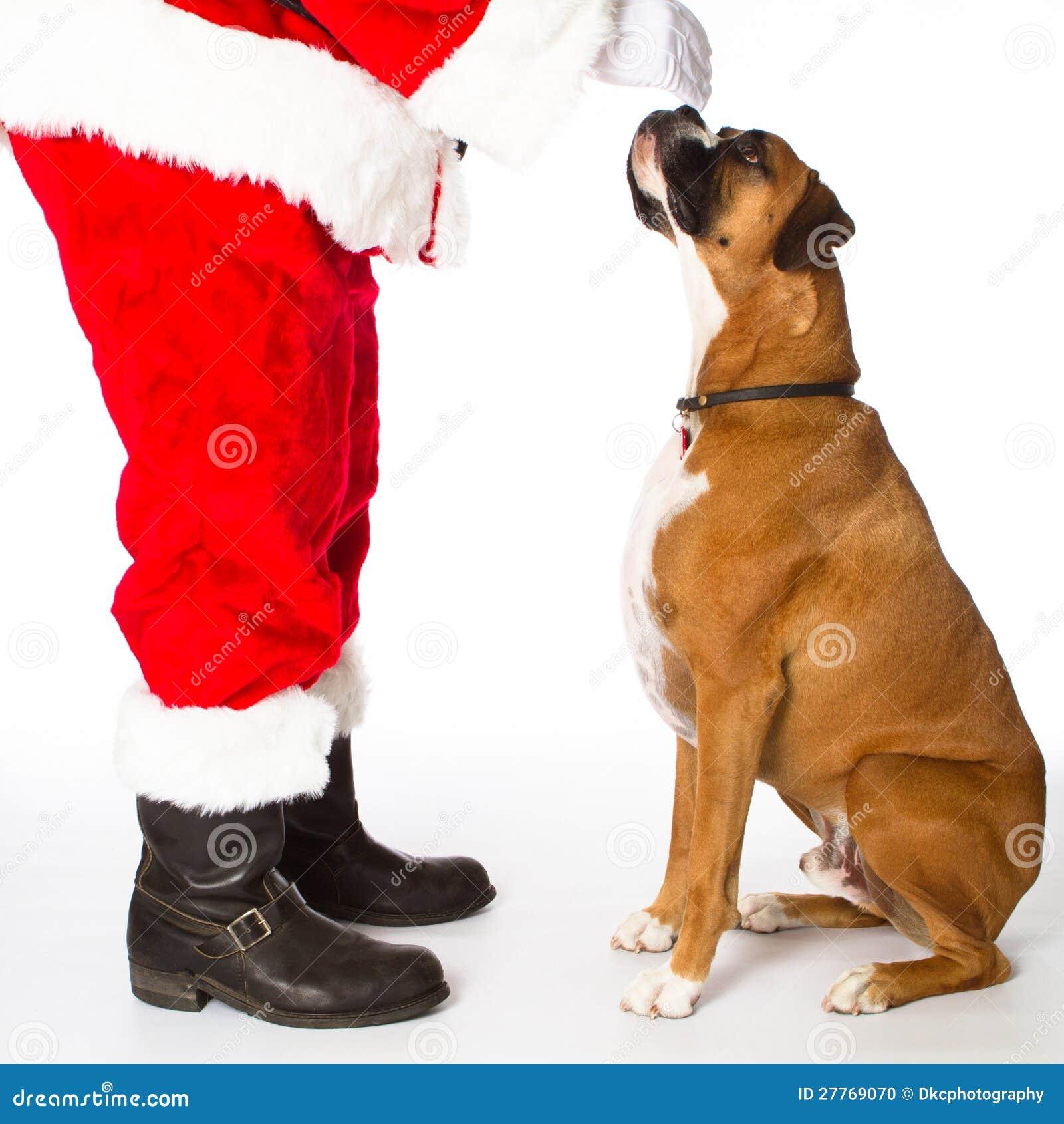 Crabot de boxeur avec Santa