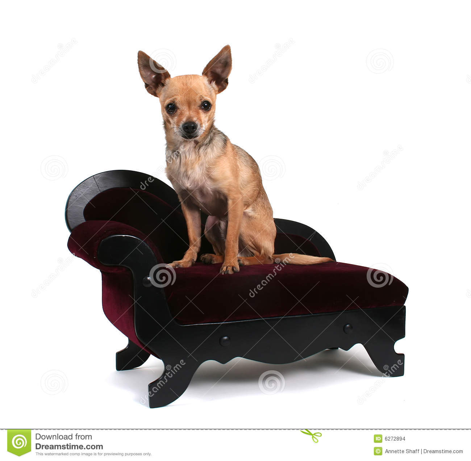 Crabot de sofa