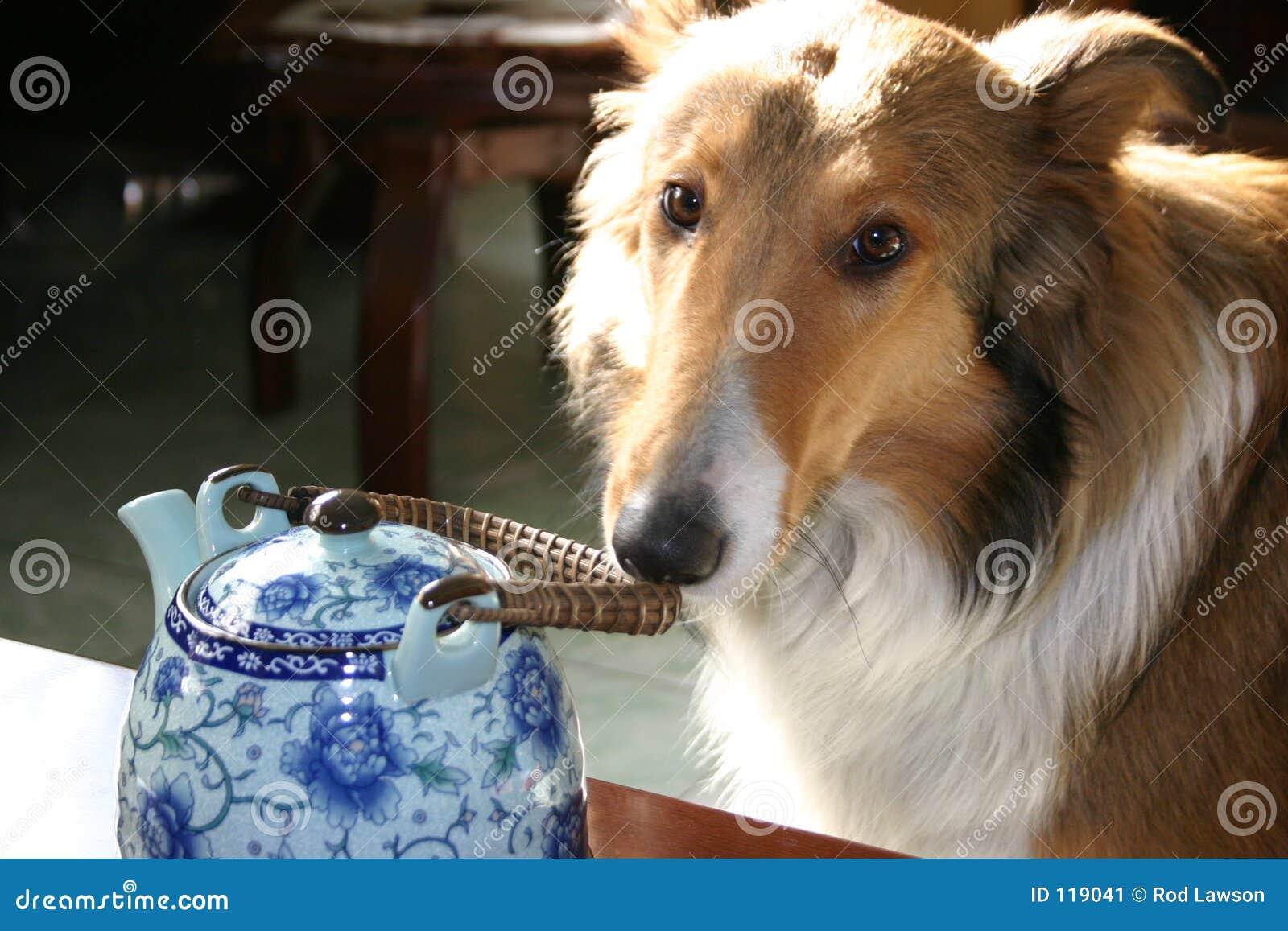Crabot et bac de thé
