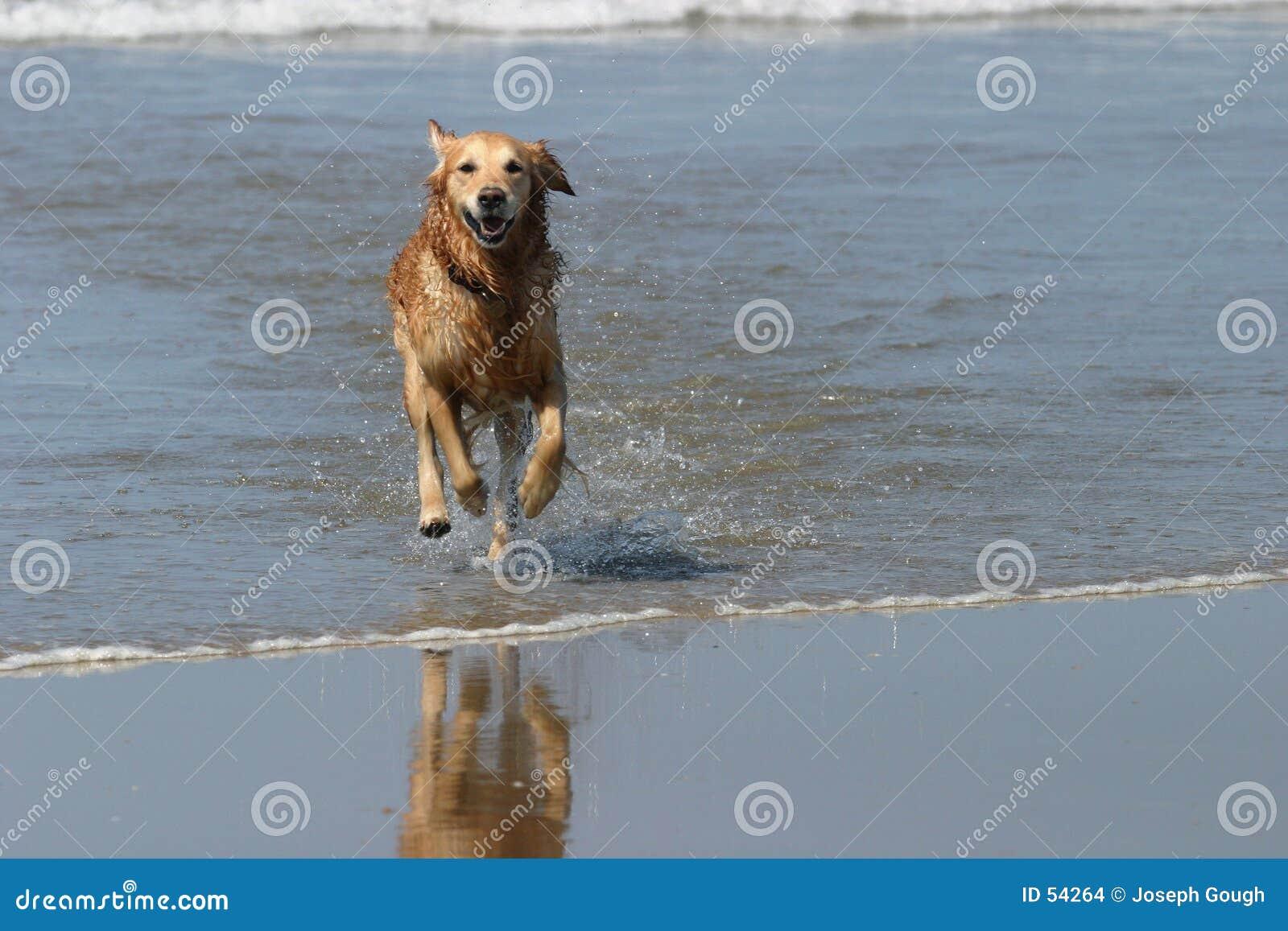 Download Crabot heureux photo stock. Image du rivage, charge, éclaboussure - 54264