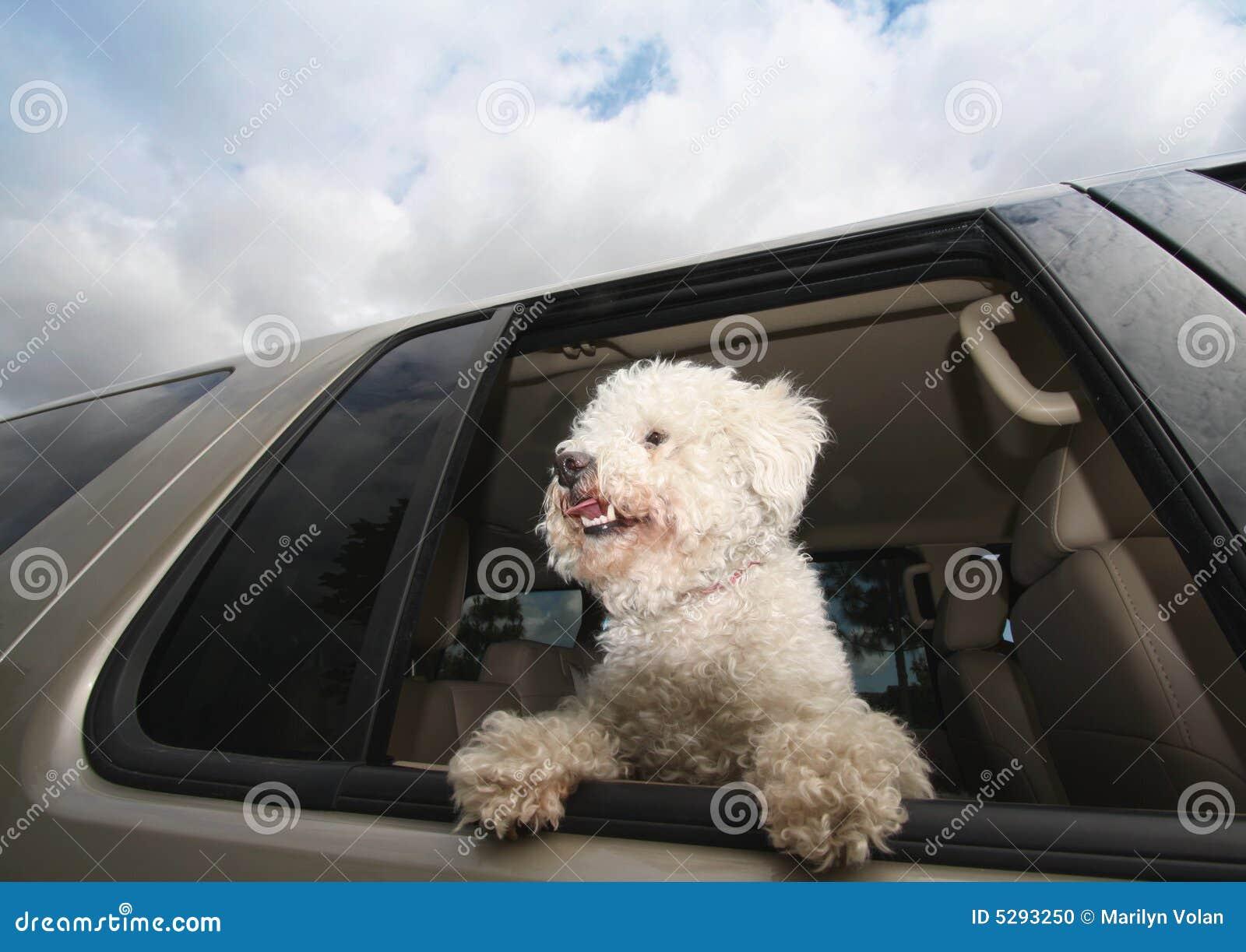 Crabot heureux dans le véhicule