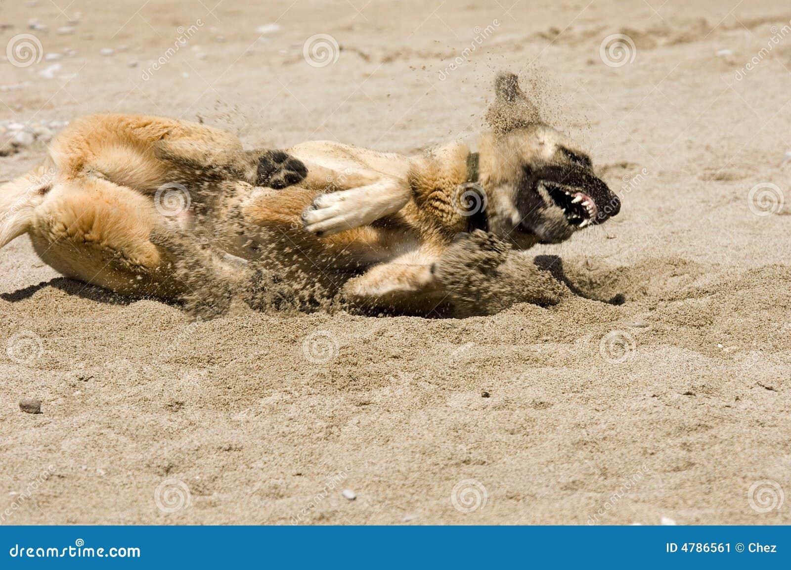Crabot jouant dans le sable