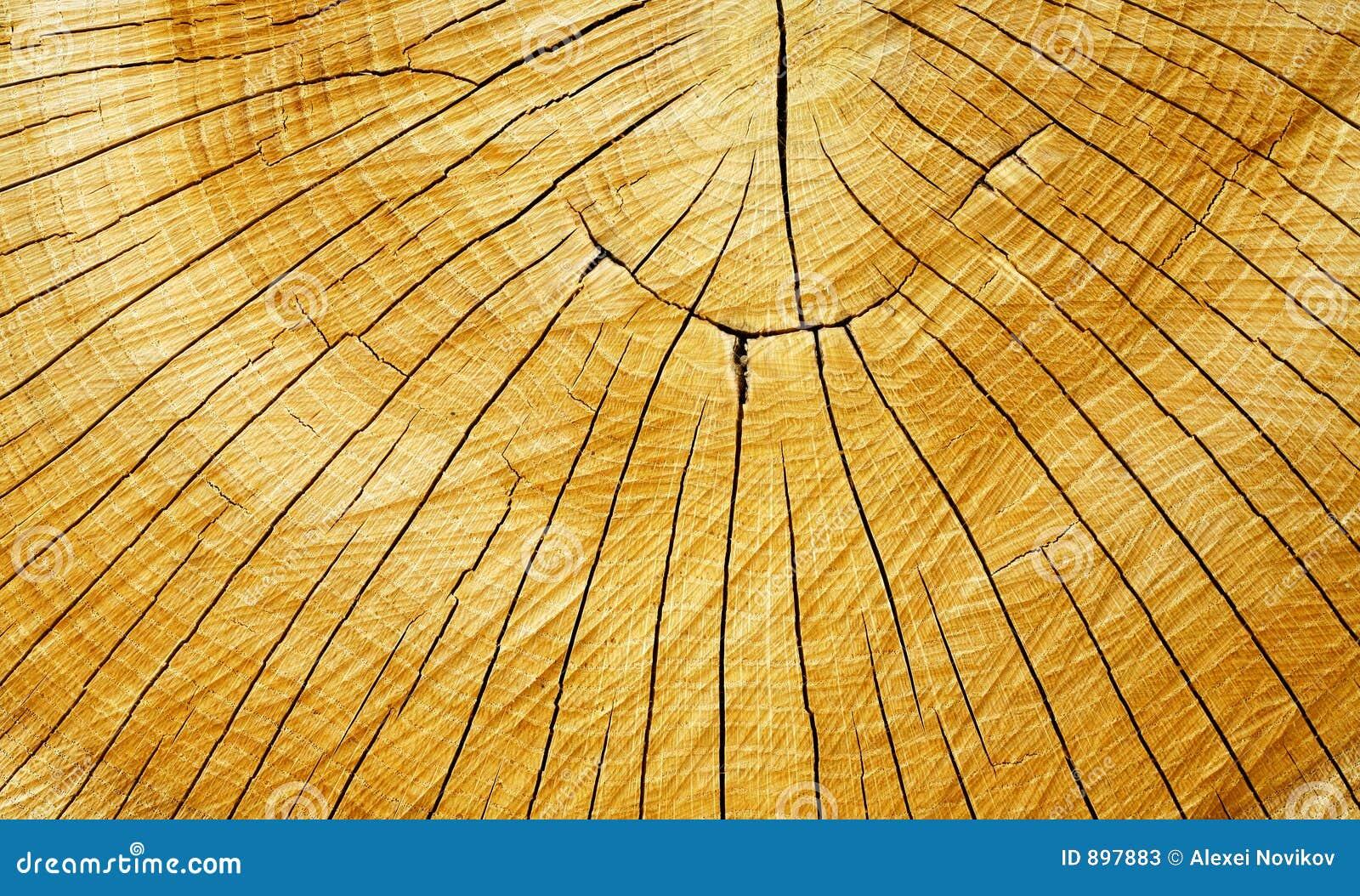 Crack pierścienie tree