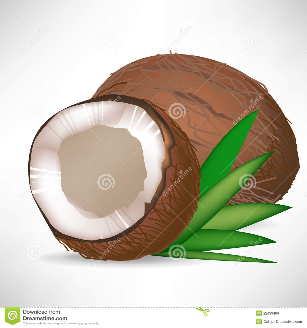 Cracked Coconut Whole Coconut Stock Illustrations 81 Cracked