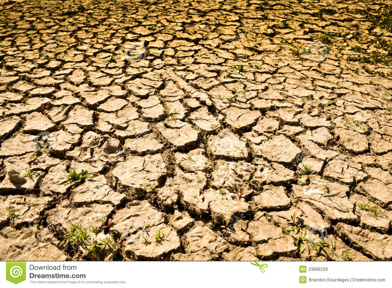 Cracked Dirt Background Cracked ground backgroundCracked Dirt Background