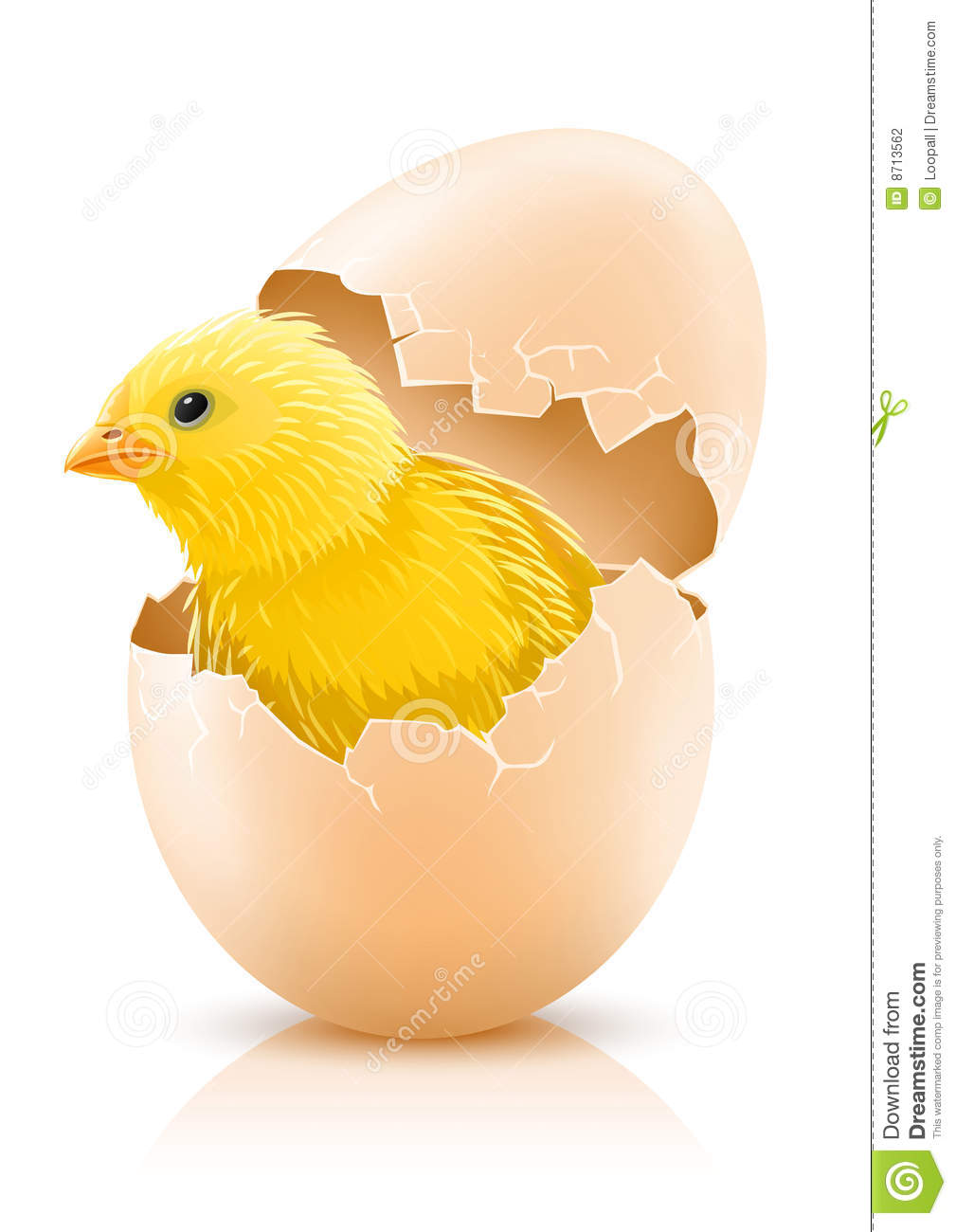 cracked hen 39 s egg with chicken baby inside stock photography image 8713562. Black Bedroom Furniture Sets. Home Design Ideas