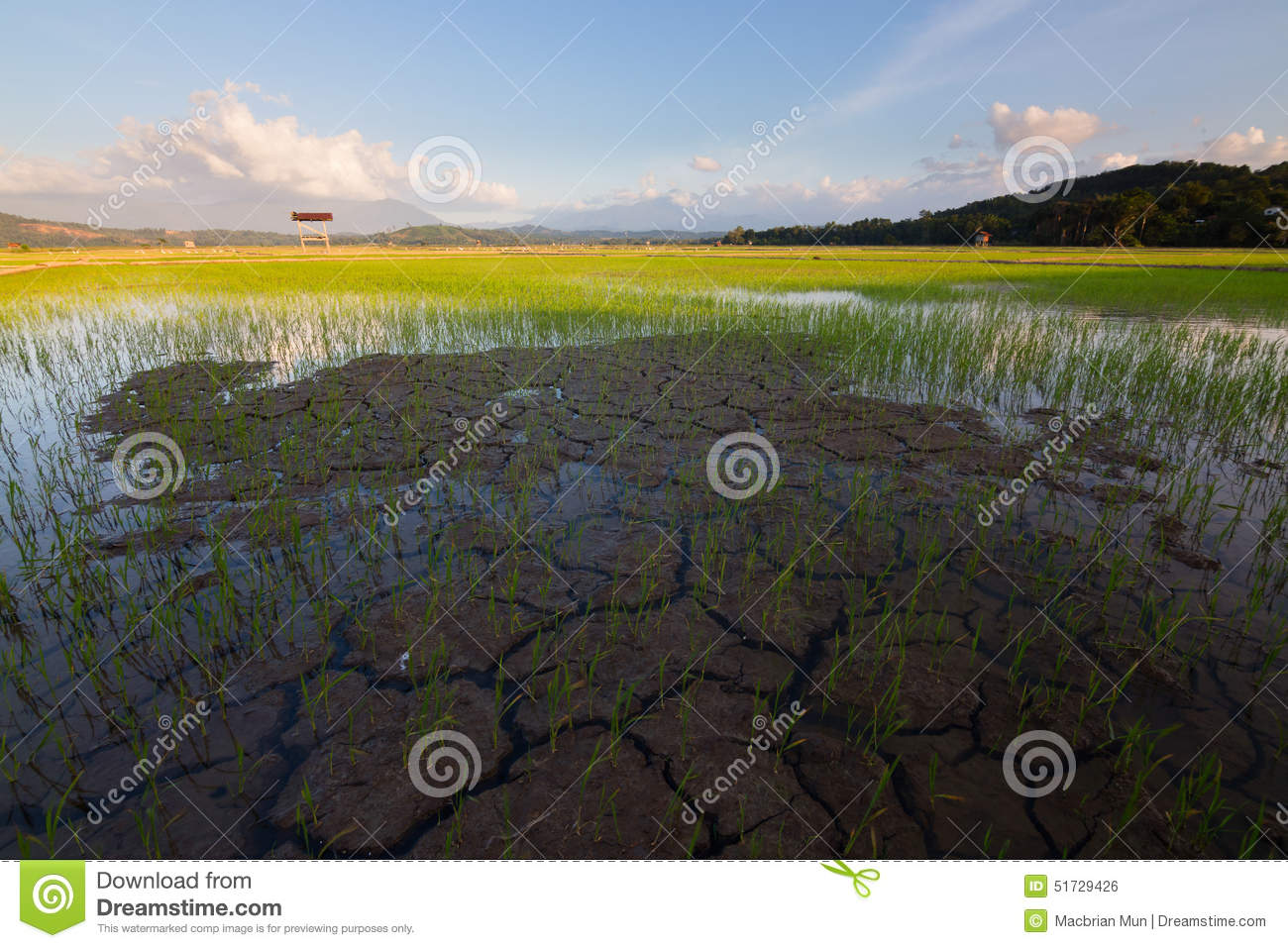 Kota Belud Malaysia  City new picture : ... soil on a paddy field in Kota Belud, Sabah, Borneo, East Malaysia