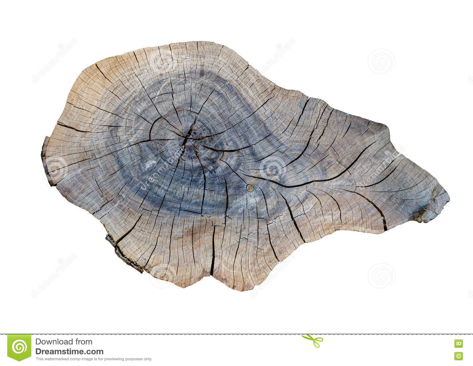 Cracking teak tree slice