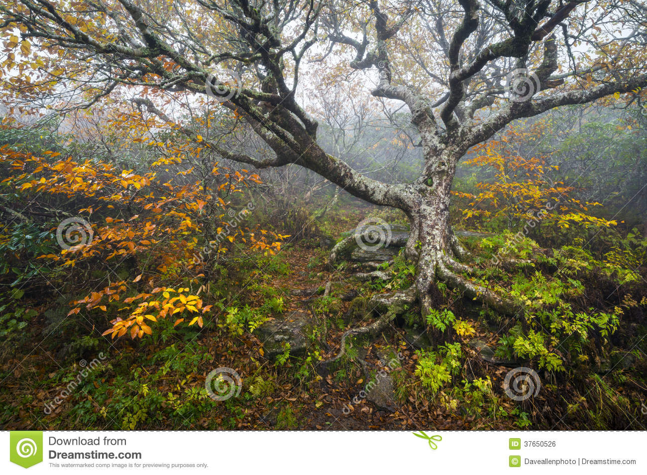 Craggy Gardens North Carolina Blue Ridge Parkway Autumn Nc Royalty Free Stock Image Image