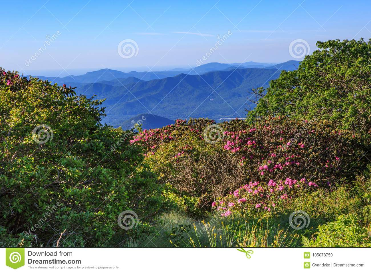 Craggy Gardens View Of Nc Blue Ridge Mountains Stock Photo