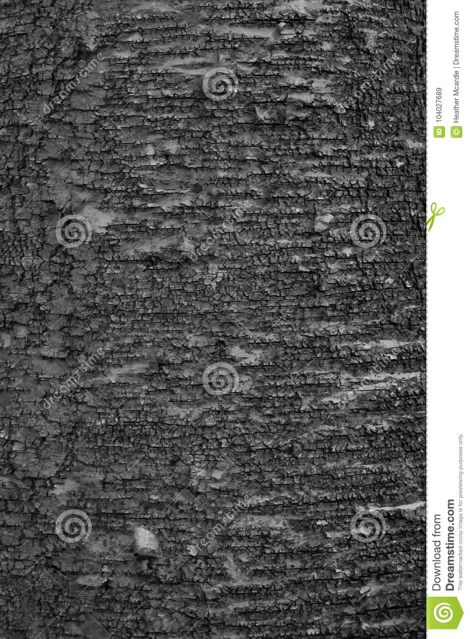 Textured deciduous bark in black and white