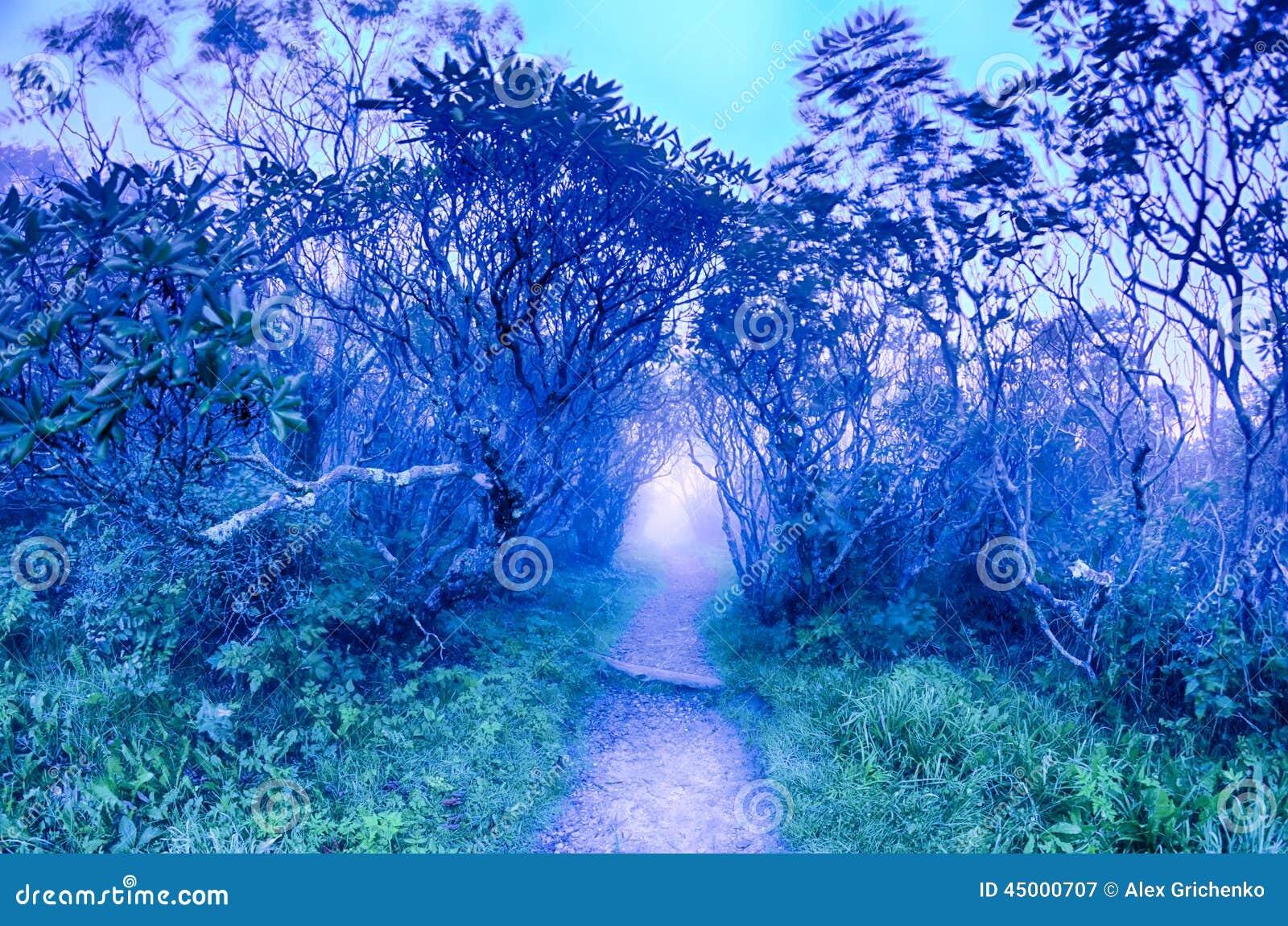 Craggy ogródów Karolina grani Parkway jesieni NC Błękitny sceni