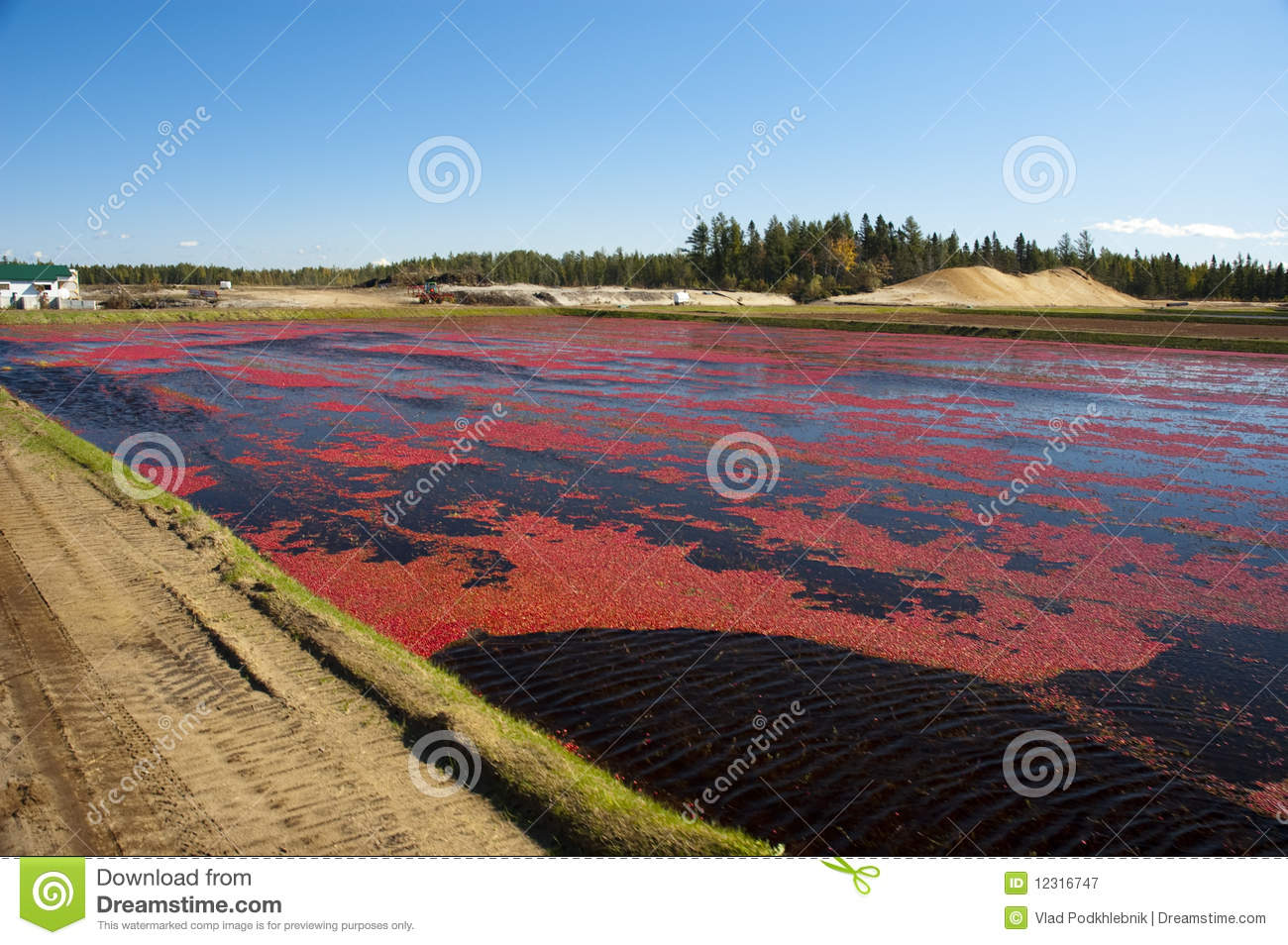 Cranberry farming Business Plans