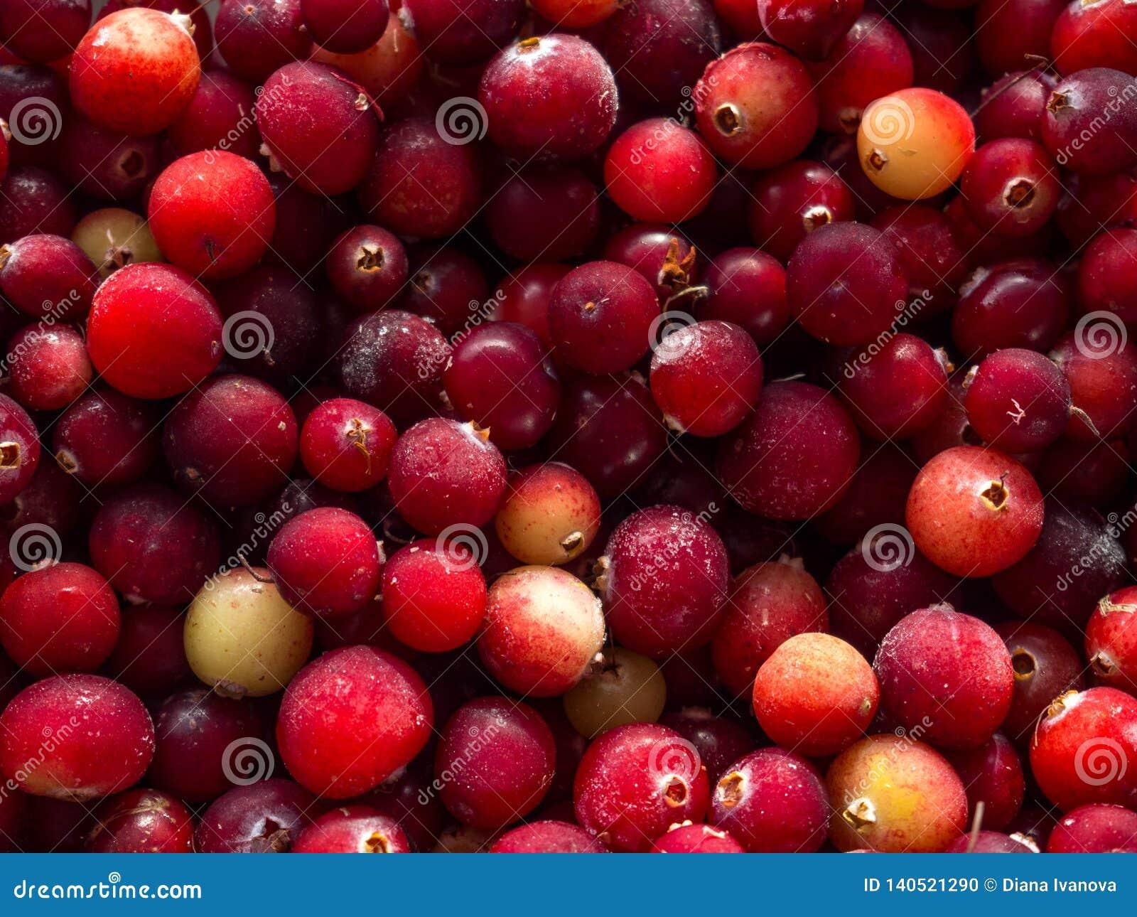 Cranberry Tranbärbakgrund många bakgrundsklimpmat meat mycket