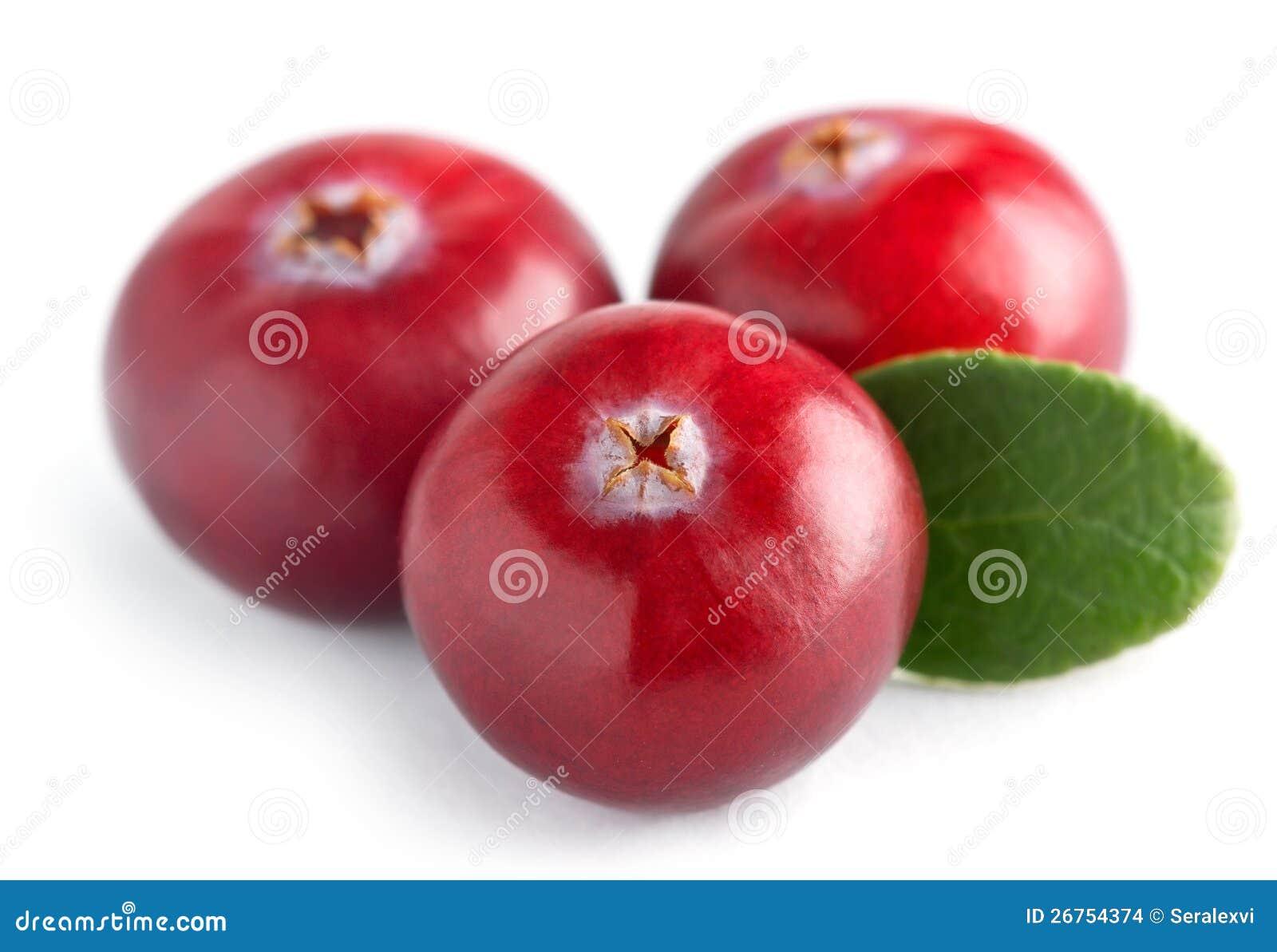 Cranberry tre med leafen