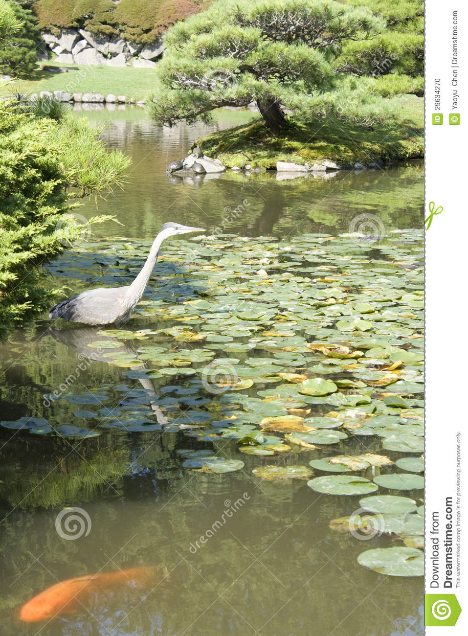 Crane and fish in japanese garden stock photo image for Japanese garden fish