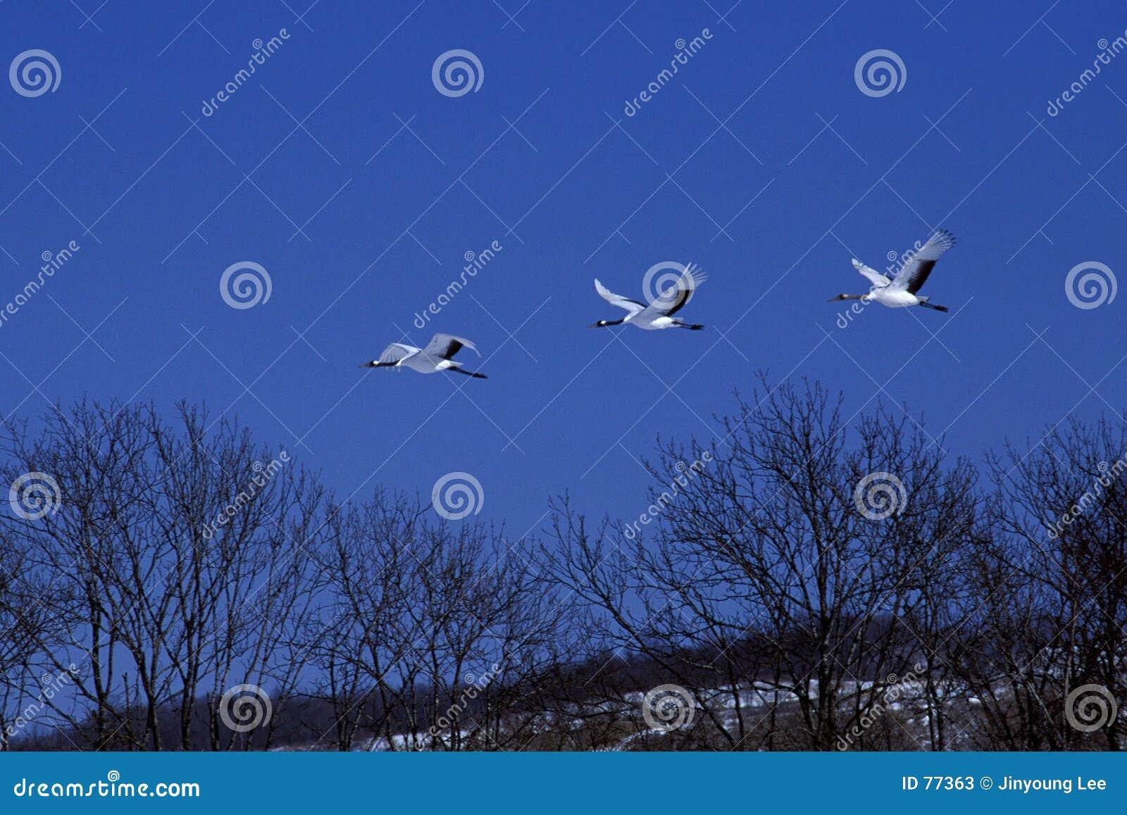 Crane latać