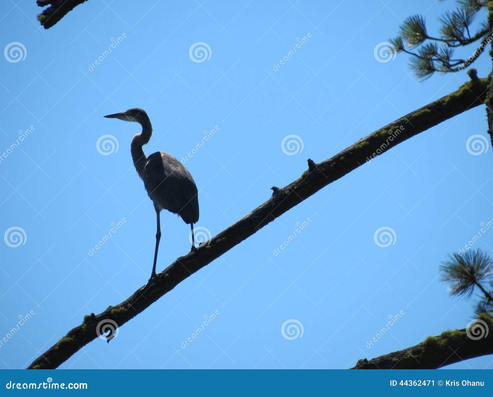 Crane Perch