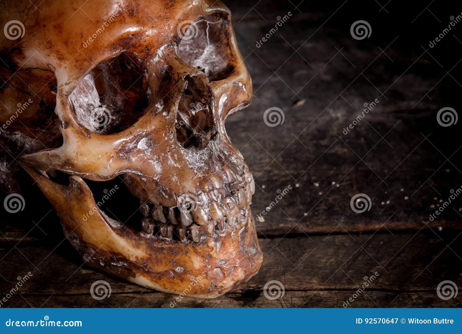Cranio umano su vecchio fondo di legno,