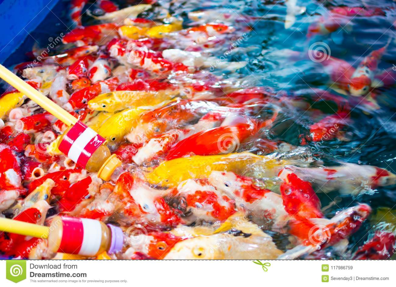 Old Fashioned Colored Koi Fish Illustration - Drawing Coloring ...