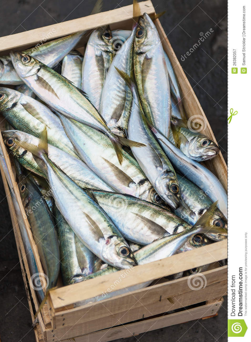 Crate of fresh fish stock image. Image of home, camogli - 26382057
