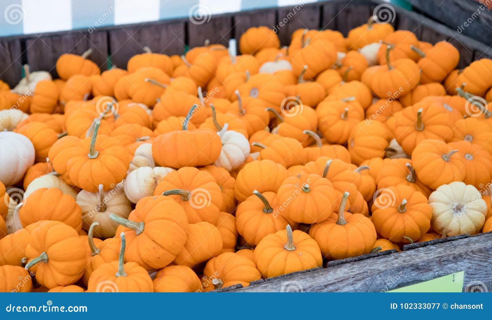 Crate of mini pumpkins