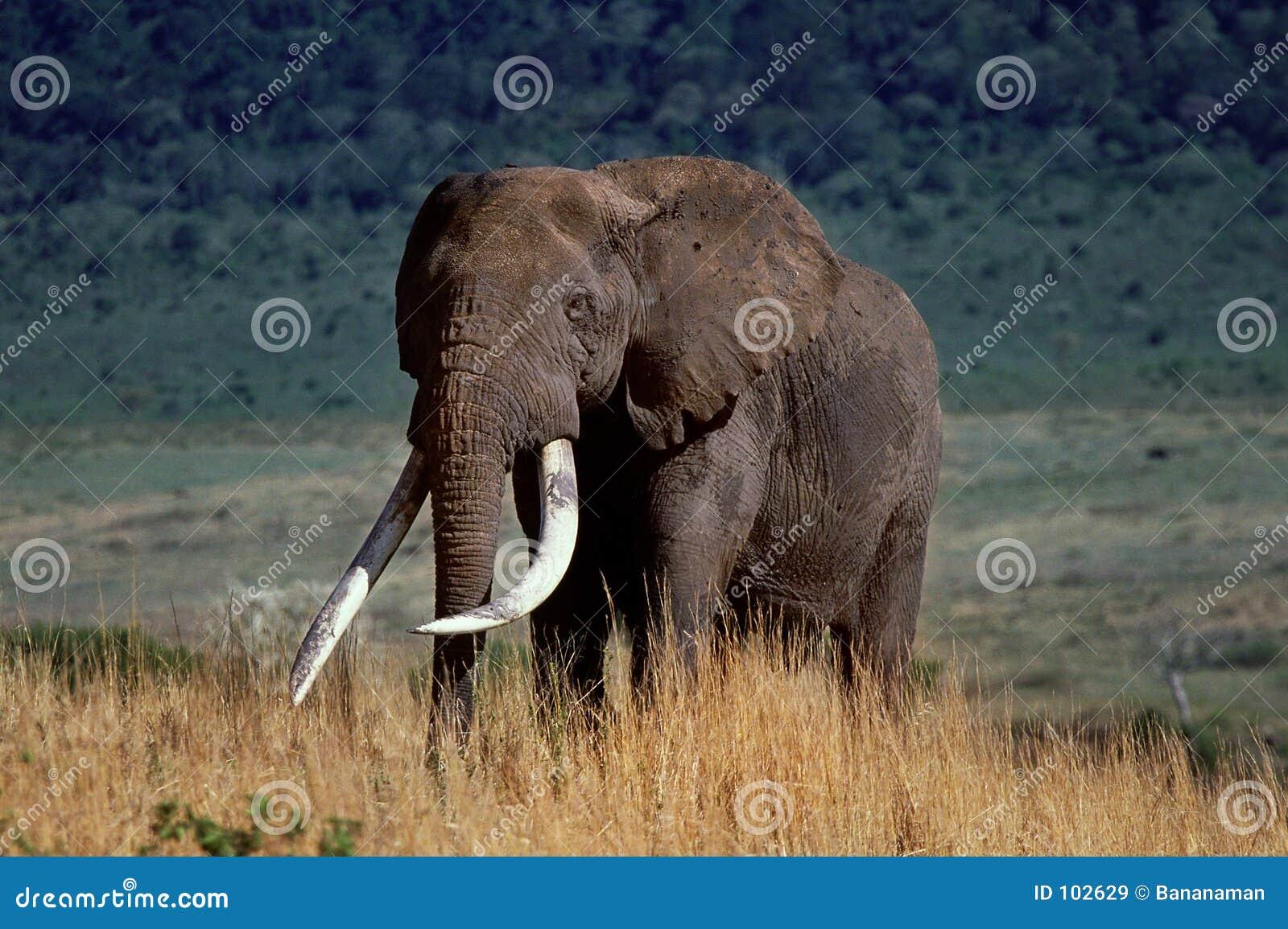 Crater elephant