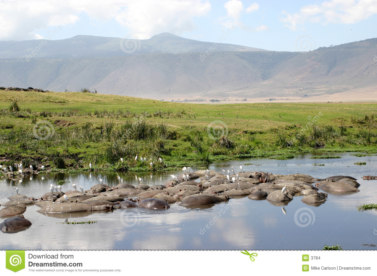 Crater Landscape with Hippos