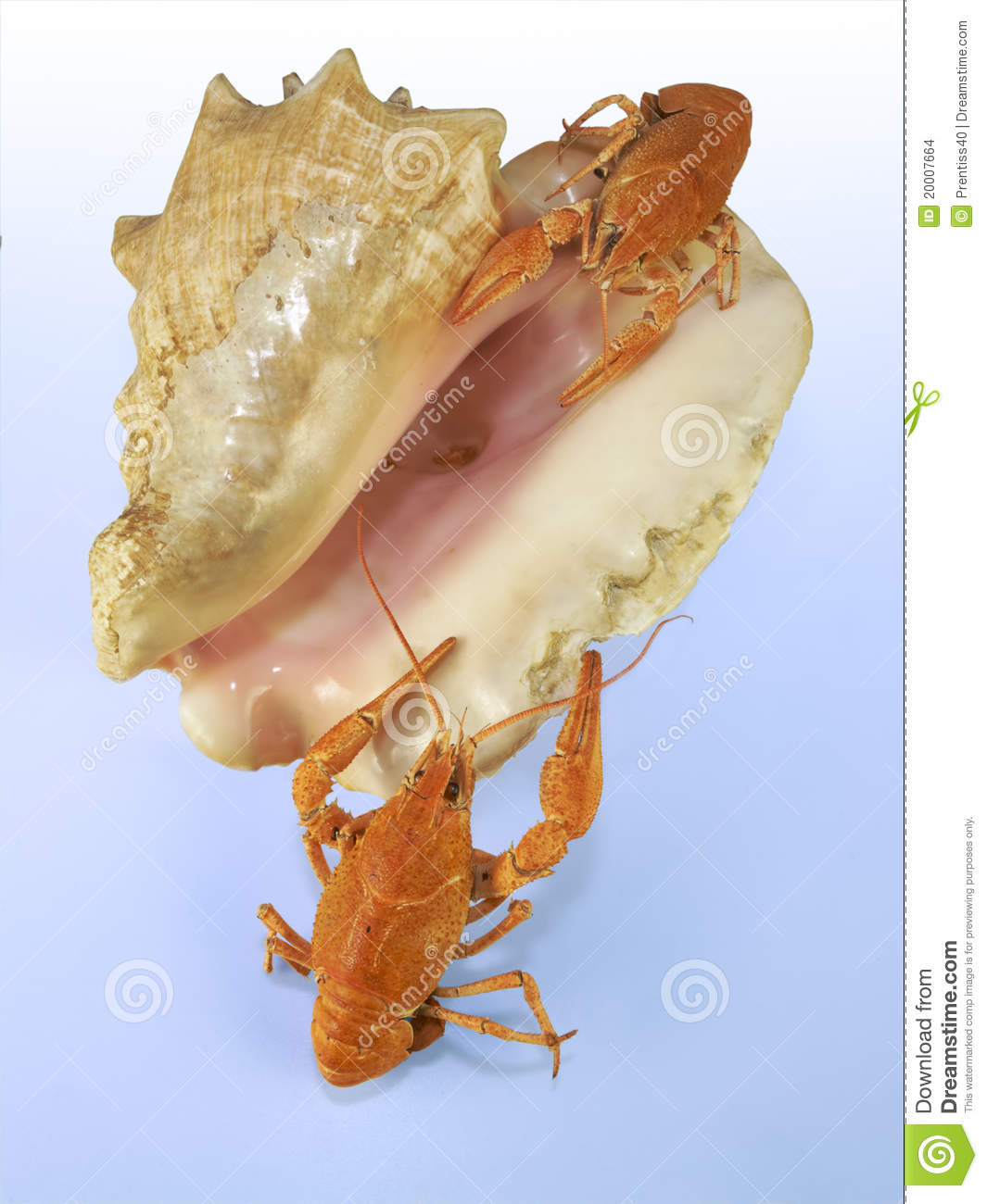 Crawfihes no seashell
