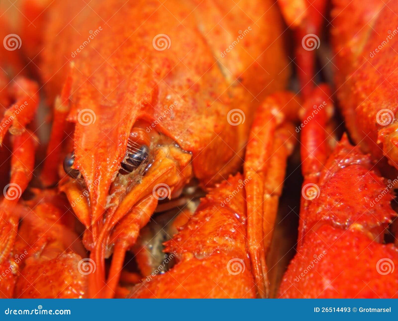 Crawfishes fervidos tomados o close up.
