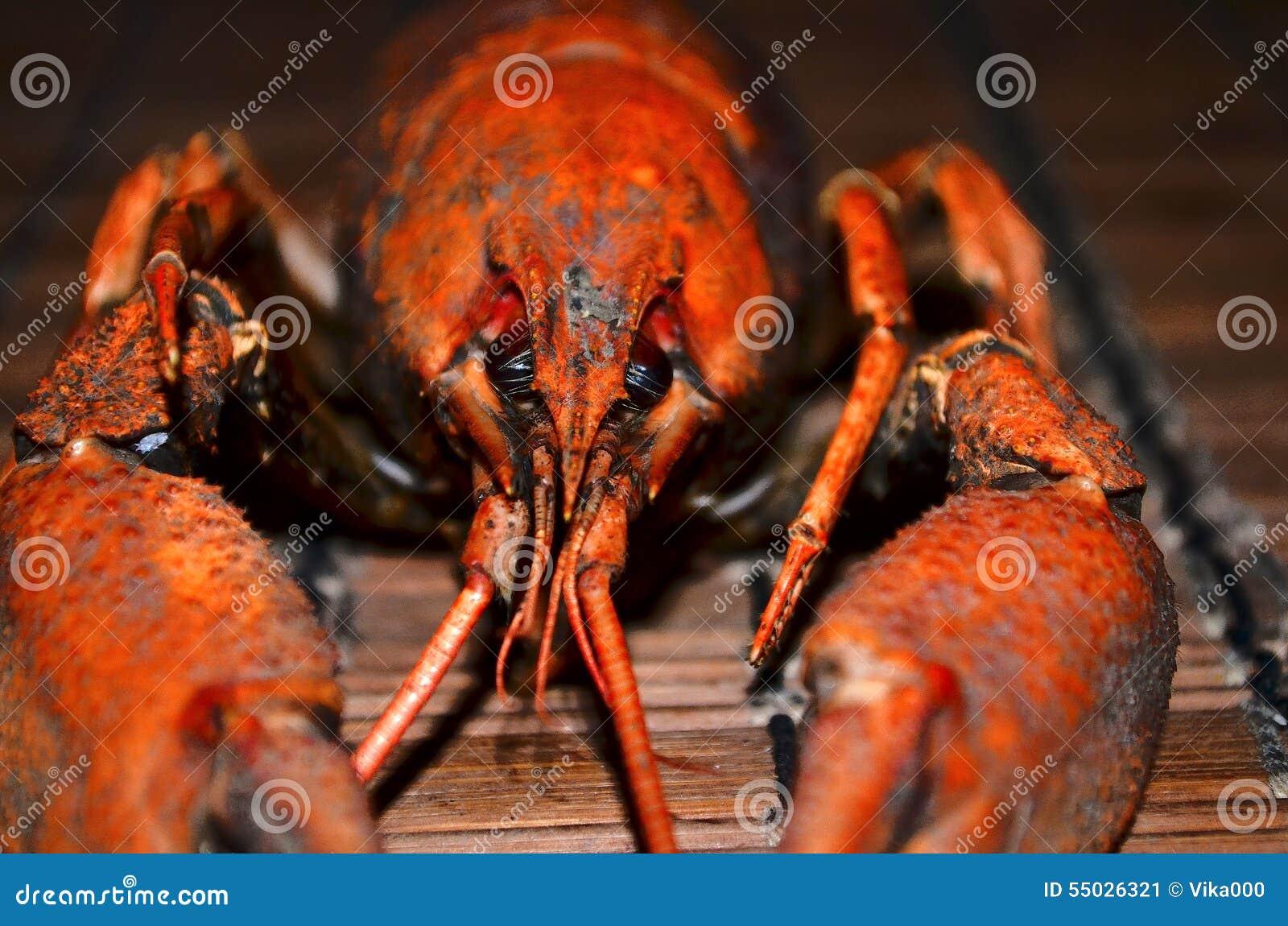 Crayfish Stock Image Image Of Color Crustaceans Blushing 55026321