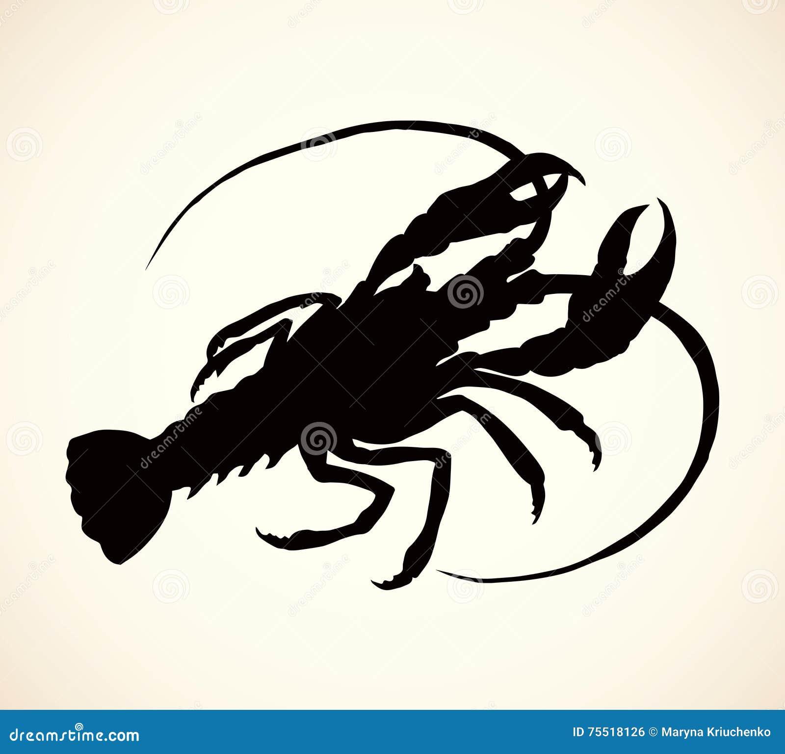 Crayfish. Vector Drawing Stock Vector. Illustration Of