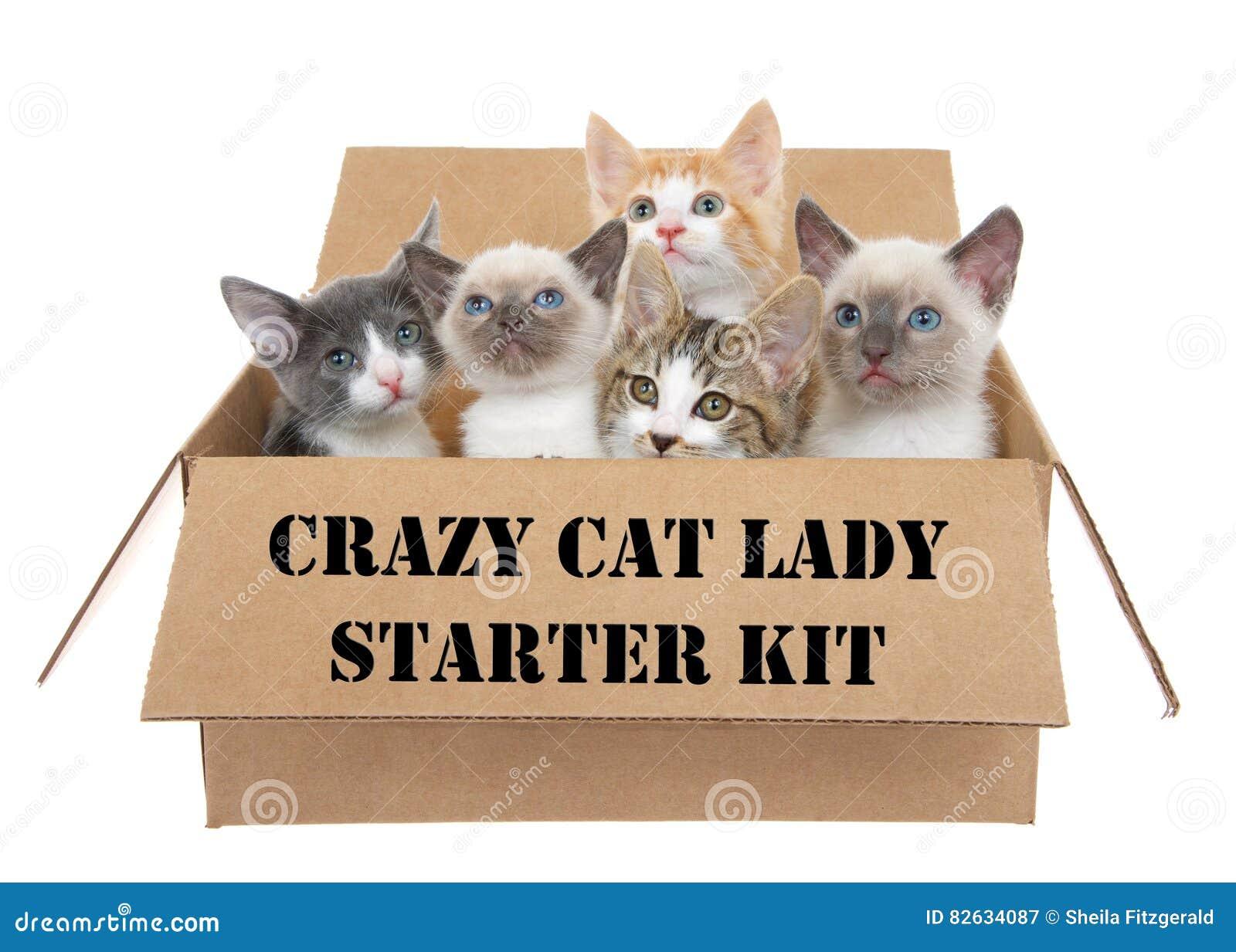 Cat Subscription Box Australia